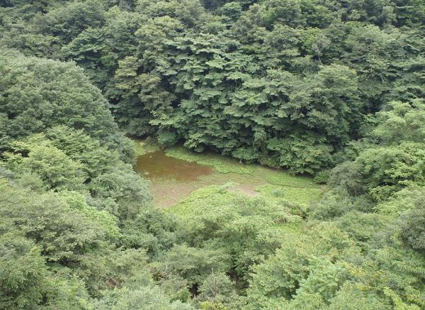 図1 富士山麓で9年ぶりに出現した赤池(2020年7月18日撮影)